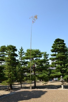 黄檗山万福寺 (25).JPG